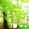 エネルギーとつながり心と体を整える瞑想~being