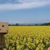 滝川市 黄色い絨毯が広がる菜の花まつりの会場にて
