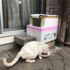 外猫ぶささん用発泡スチロールハウスに簡易なドアを付けてみた