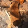 愛犬りょう 35