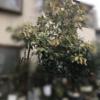 東京にはアボカドの木が多いかもしれない…