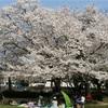 【レポ】第35回 三好池桜マラソン/ズームフライの感想