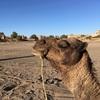 サハラ砂漠1泊2日の現地ツアー!②:感動の絶品タジンに満天の星空と流れ星