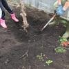 庭木を処分して開墾〜