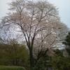 矢瀬親水公園、高橋の若どり