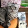 トラヨは洋猫