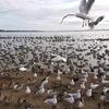 たくさんの水鳥とふれあえる冬のお出かけスポット「白鳥の里」~茨城県潮来市~