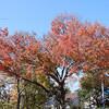 秋色いっぱいの平和公園