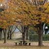北柏ふるさと公園の紅葉と鳥たち