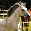 乗馬体験記