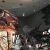 昆活に続いて 常設展 恐竜 : 大阪市立自然史博物館