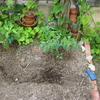 【家庭菜園】ミニトマト植えました。