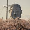 gkojax: 豊川のおぐりんさんのツイート: グラサン大仏こと布袋の大仏様周辺の桜、今が見ごろです!...