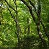 【書評】森のように生きる~読後レビュー~森林セラピーに通じる「森に身をゆだね 感じる力を取り戻す」ということ