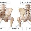 仙腸関節、恥骨結合(寛骨-仙骨間)の関節包・靭帯