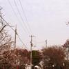 一日一撮 vol.493 梅を求めて滝宮天満宮:ちょっと時期が早かった