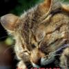 猫はどれくらい寝るの?オススメのベッドは?