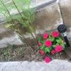 【DIY】モダン調花壇 ガーデニングと赤い花