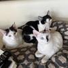 猫を飼うということ:預かりさんから里親さんになりました(^▽^)/