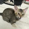 保護した子猫の隔離解除で仲良く運動会開催。そして1匹トライアルへ!【保護猫日記】