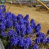 浜ちゃん日記     体調管理と花壇の整備作業