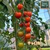 森バナ農園2021㉔ 『まとめて収穫報告(7/14~20)』