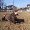 馬たちとカイロプラクティック その1