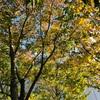 新宿の公園🌳🌳😊