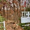 3つの発見「葉っぱが落ちて出会う景色」「ヤドリギ」「藤井風」