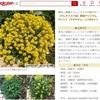 【ブログ運営】楽天の商品ページにブログの花の写真が掲載されました!