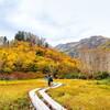 栂池自然園が紅葉したと聞いて白馬に行ってきた。※栂池自然園は白馬村でなく小谷村です