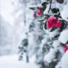 冬は甘い香りに包まれて乾燥対策!バニラ&ハニーの香りのボディケア用品