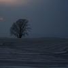 哲学の木 夕暮れ