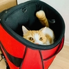タコ壺ならぬ、ネコ壺です。