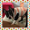 Pippa's blog
