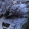 また雪模様