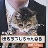 猫付き選挙ポスター