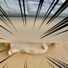 愛猫がソファの下から飼い主に肝試しを仕掛けてきますw