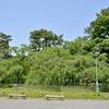 新緑の京都御苑を散策。