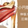 小円筋の伸張テストと圧痛好発部位