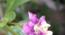 クコ 初めての花