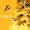 【用途別みつばち産品の選び方】はちみつだけじゃない、ミツバチ産品の活用法