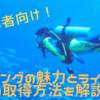 【初心者向け】ダイビングの魅力とライセンスの取り方ガイド