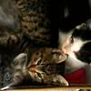 10月19日|降り始めた雨。子猫のケアと捕獲の試み ~活動の限界? 命の限界?(その2)~