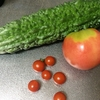 庭のトマト 第一号がヤラレタ!