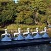 昨日の晩ごはん 12月14日 鮭(酒)は銚子(ちょうし)に限るらしいが群馬もなかなか