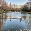 貝柄山公園の池(千葉県鎌ヶ谷)