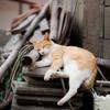 猫漁(15)