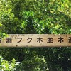 私のパワースポット №2癒しの場所 楽園の緑 備瀬のフクギ並木