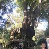 【熱海】パワースポットとして有名な来宮神社と大湯間歇泉♡